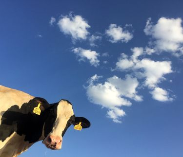 Should you cut down on dairy?