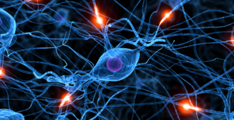 Shake it Up Exercise Proven to Reorganise the Brain