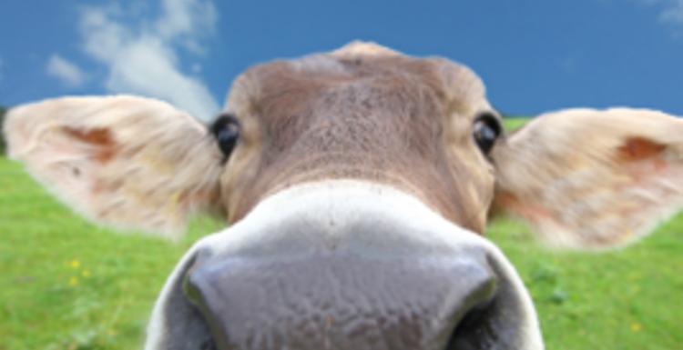 The Great Vegetarian Debate