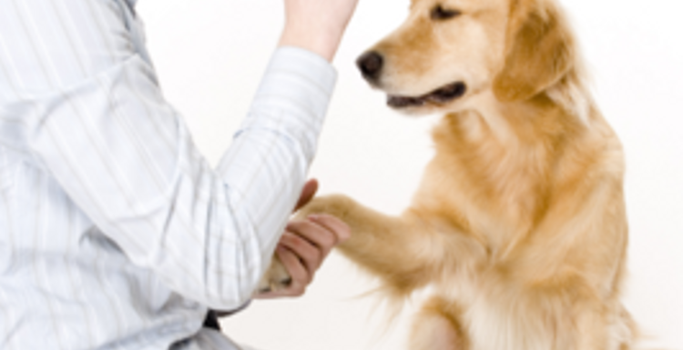Is a dog your healths best friend?