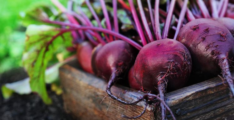 Boost your workout with beetroot, the seasonal super veg